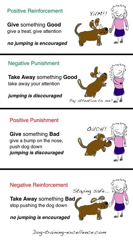 Operant conditioning- helps with my psych class and how to train my dog too.