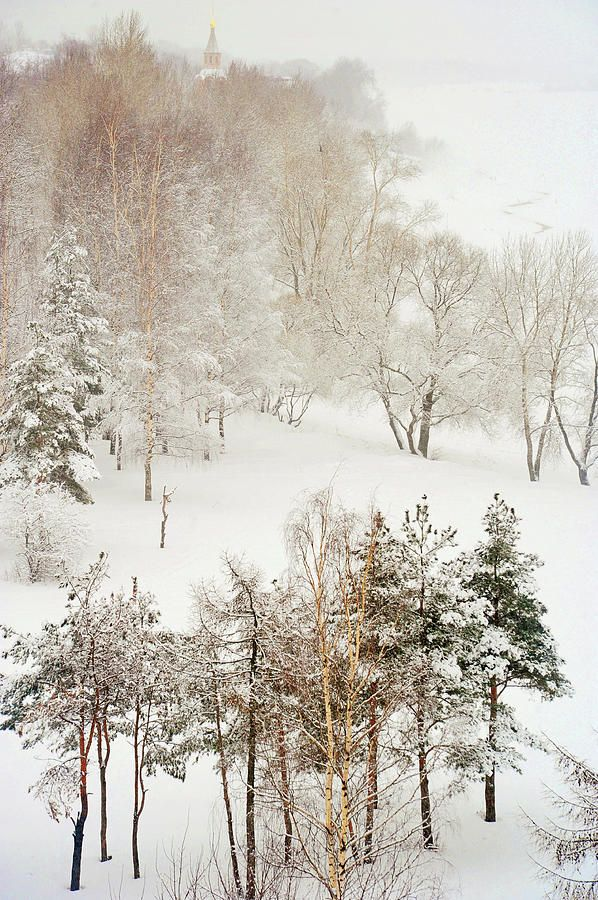 Winter Delight by Jenny Rainbow.  Charming winter scene with lacy trees after heavy snow fall in Russian countryside.   This work bringing the tenderness and lightness with soothing harmonic vibes to your home.   A beautiful idea for Christmas gift for family or for friends.   #JennyRainbowFineArtPhotography #Christmas #Winter #homedecorideas
