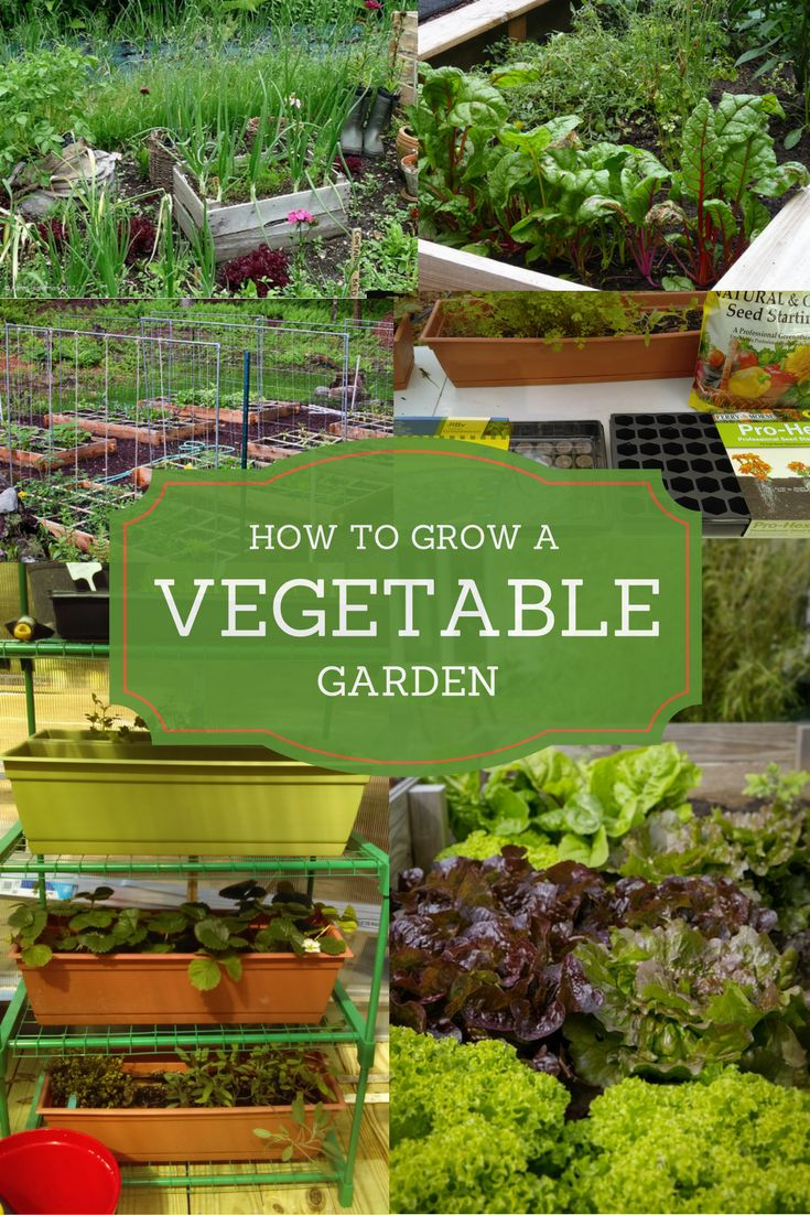 Gardening A to Z - Everything You Need To Know