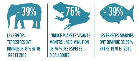 La population des espèces vertébrées mesurées par l'IPV a diminué de moitié sur les 40 dernières ... / ©: WWF International