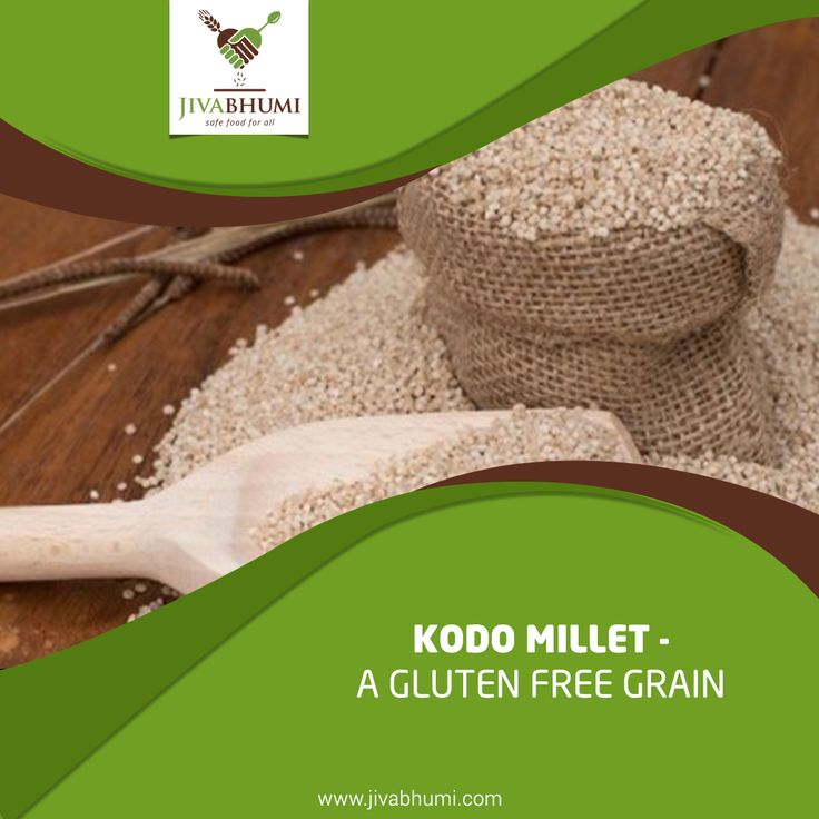 Millets are rich in various vitamins and minerals such as folic acid, niacin, calcium, iron and potassium. Kodo millet contains no gluten and is good for people who are gluten intolerant. Shop now: http://bit.ly/shop_jivabhumi #Jivabhumi #FarmFood #NaturalFood #Healthy #Millets #KodoMillets