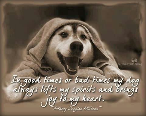 Dog wisdom... | Cute pics of all Gods blessings | Pinterest