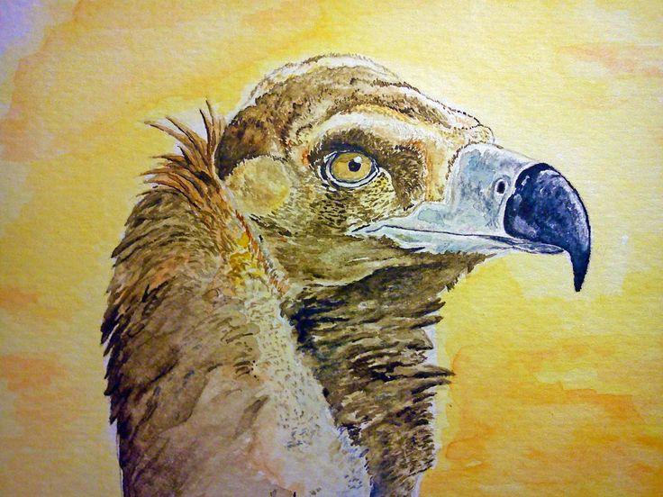 Las aves rapaces: Webcams de buitre negro y búho americano.