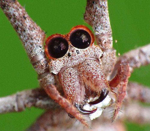 halloween spider faces
