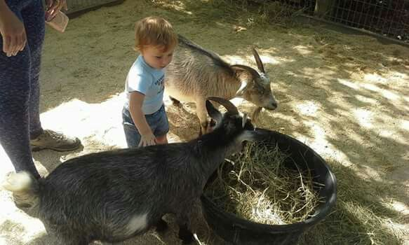 Petting zoo with the goats!