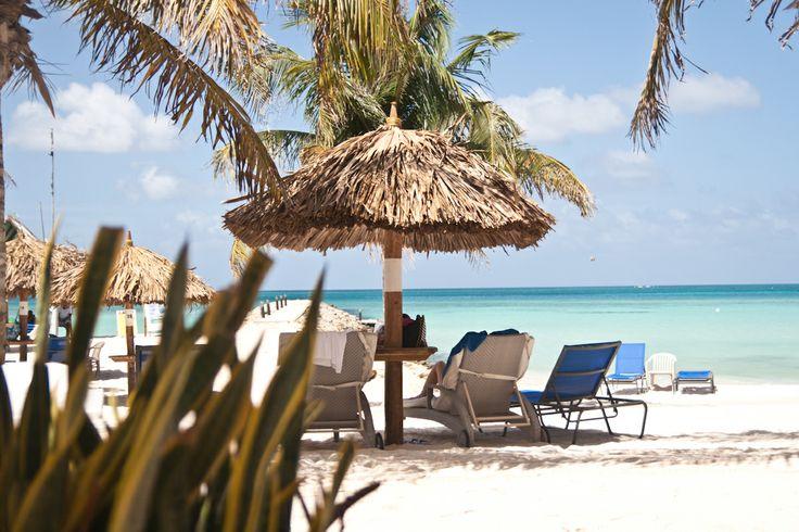 #aruba #beach #palm #trees #relaxation #divi