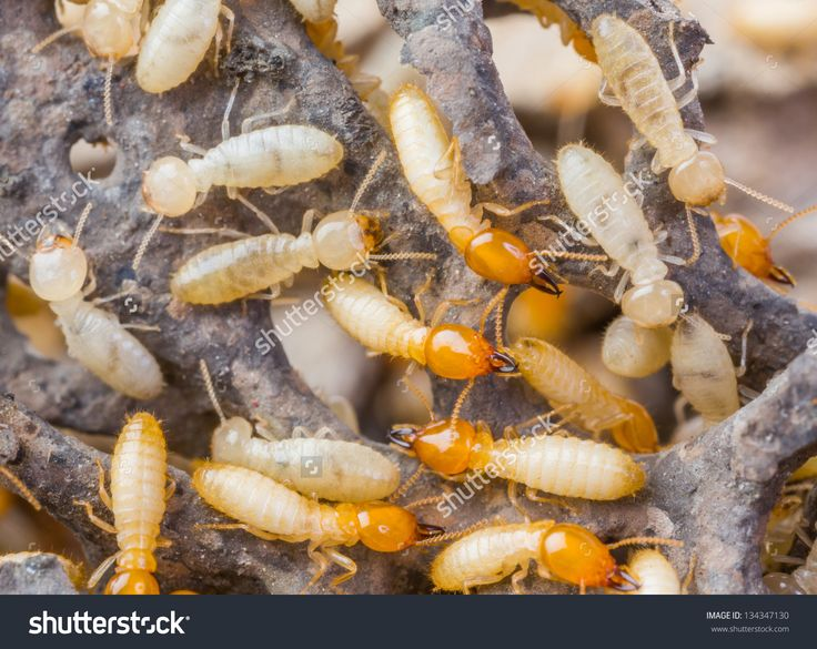 Close up termites or white ants in Thailand