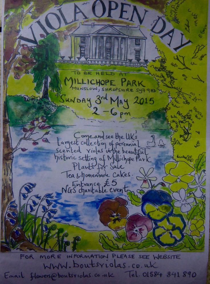 Viola Day 3 May 2015 Millichope Park Shropshire