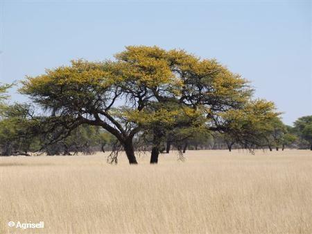 Olifantshoek | South Africa | 527590