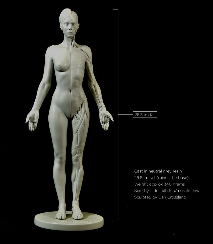 60 best 3dtotal Anatomy images on Pinterest | Anatomy reference ...
