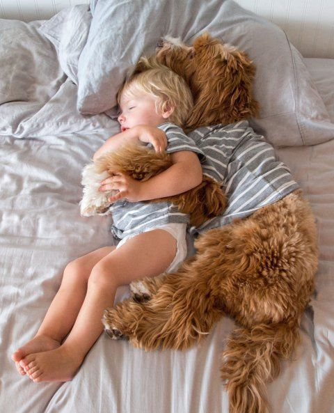Reagan the labradoodle and Little Buddy have a nap