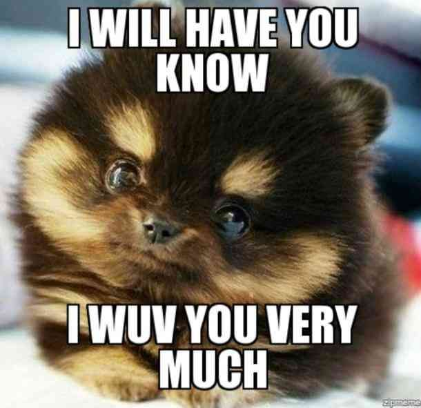 The 40 Best I Love You Memes That Are Cute Funny Romantic All At The Same Time Love You Meme I Love You Funny Love You More Meme