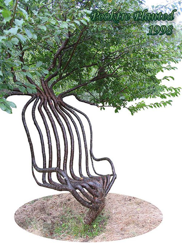 Growning Chair: Tree Grown As A Chair By Peter Cook By Guido J. Van