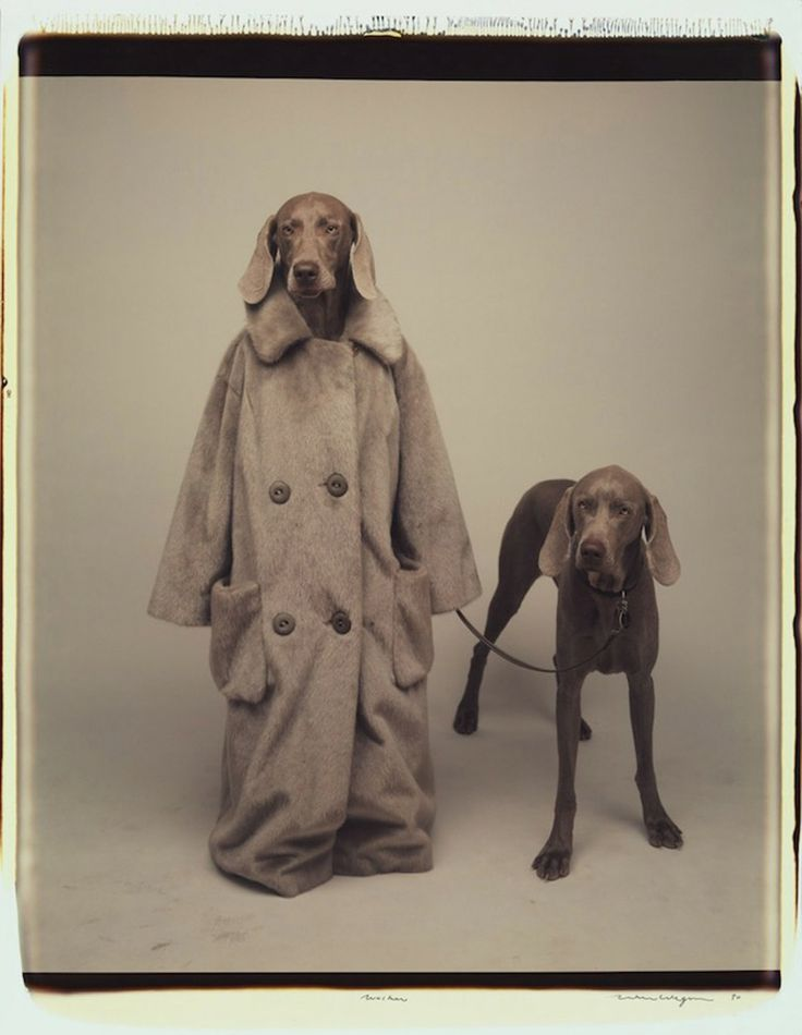 The Trussardi Greyhounds, photography by William Wegman for Trussardi S/S14