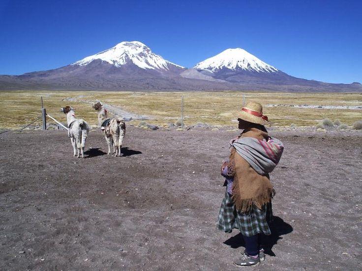 Año 2006. Caquena; pueblo a 20 km al norte del pueblo de Parinacota. Lugar de inmensos bofedales virgenes. Volcanes Payachatas (Pomerape y Parinacota)