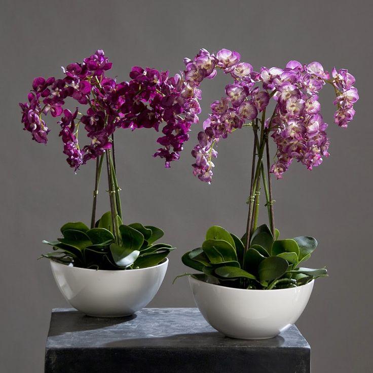 Орхидея: уход в домашних условиях http://www.myflora.com.ua/index.php?option=com_content&task=view&id=364&Itemid=1