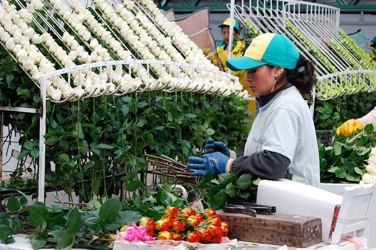 Fairtrade blomster