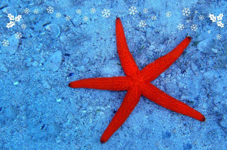 #AcquariodiGenova christmas star :)  http://www.acquariodigenova.it/