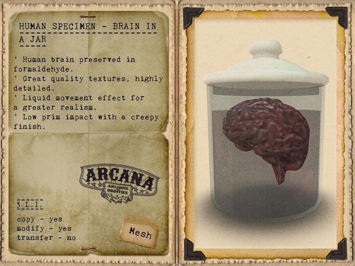 {A} Human Specimen - Brain in a Jar