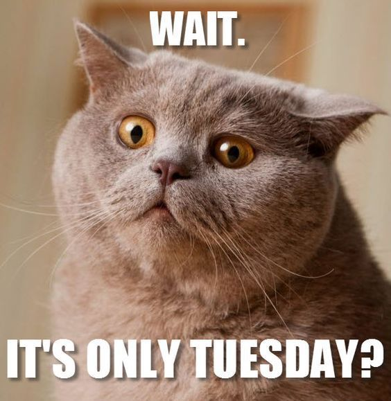 Its Tuesday Best 25+ Tuesda...