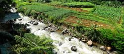 Heerlijk wandelen door de rijstvelden in Bogor. Het geluid van stromend water in de rivier. De huisjes in de kampung. Kampung-bewoners die bezig zijn met hun dagelijkse activiteiten. We sluiten de ...