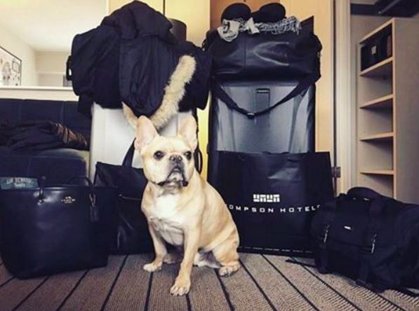 Can someone help me with my bags? Photo: @mrcutterman
