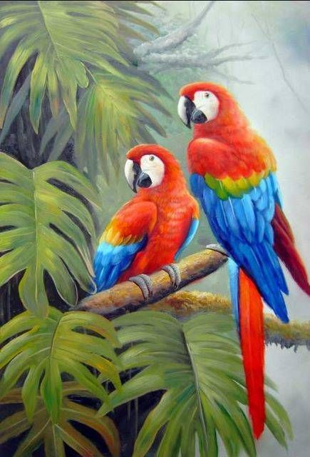 paintings of parrots - Google Search