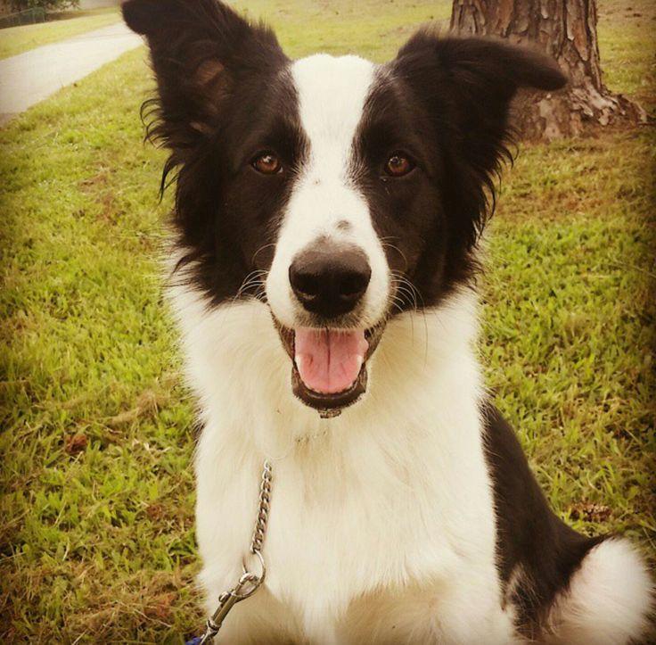 PADDY...........SO HAPPY! dogsbigdayout.com.au