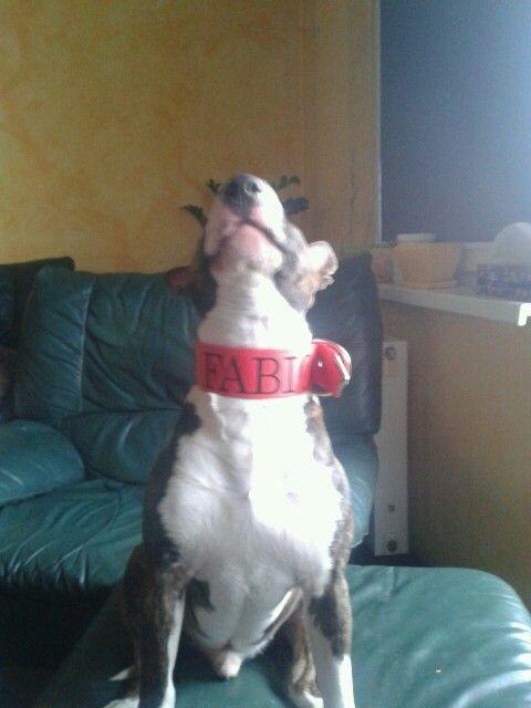 Fabio superbull
