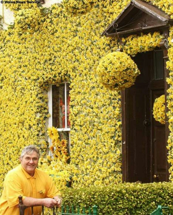 This Welshman covered his house in 9000 daffodils for St David's Day
