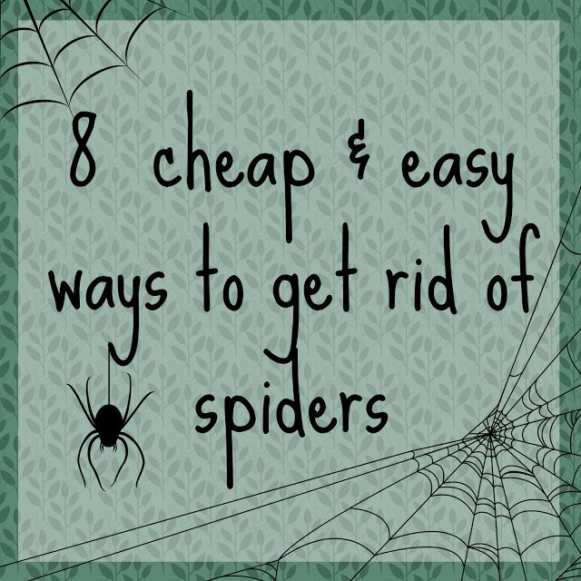 A Thrifty Mrs | A fun money saving blog: How to Keep Spiders Away