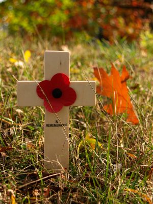 Wooden crosses for Remembrance Day