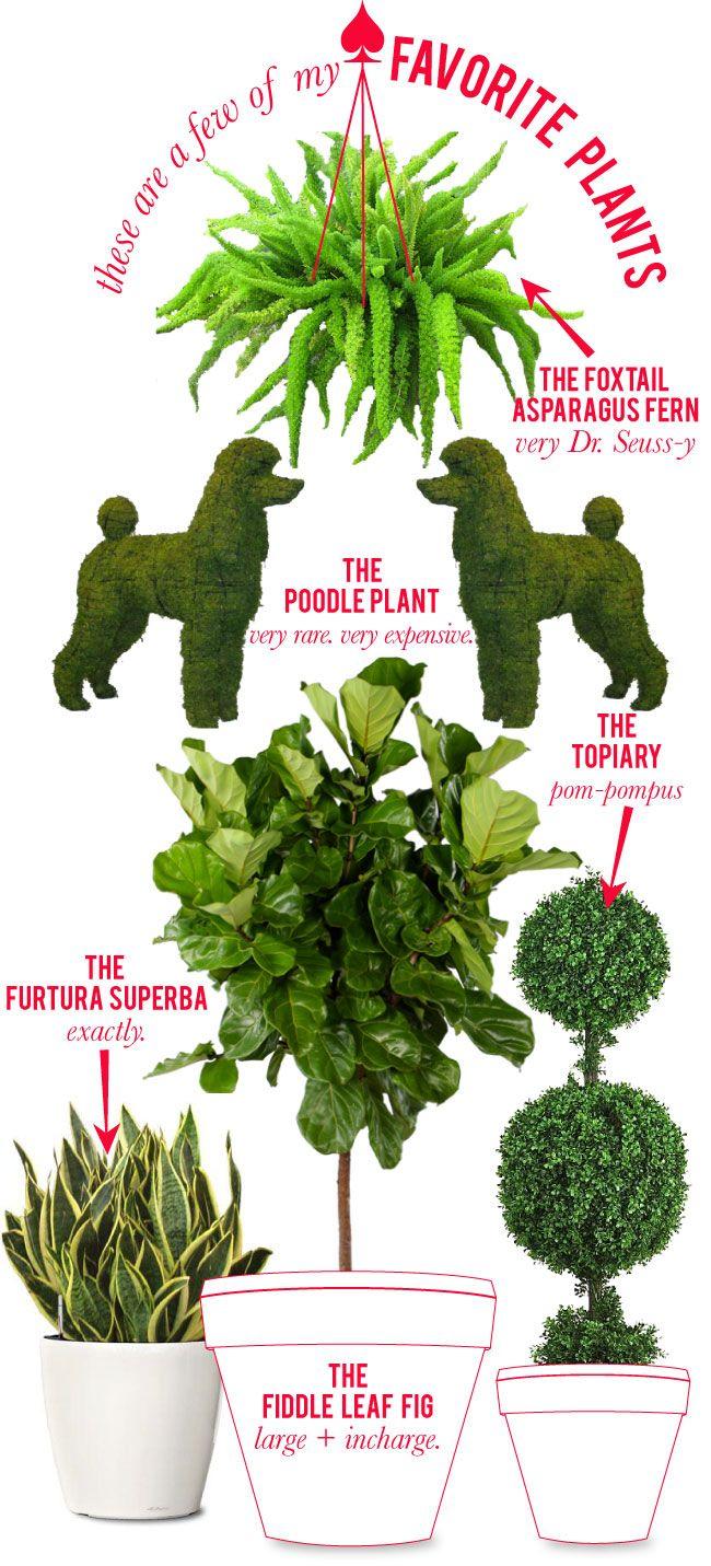 Love the Poodle Plant!