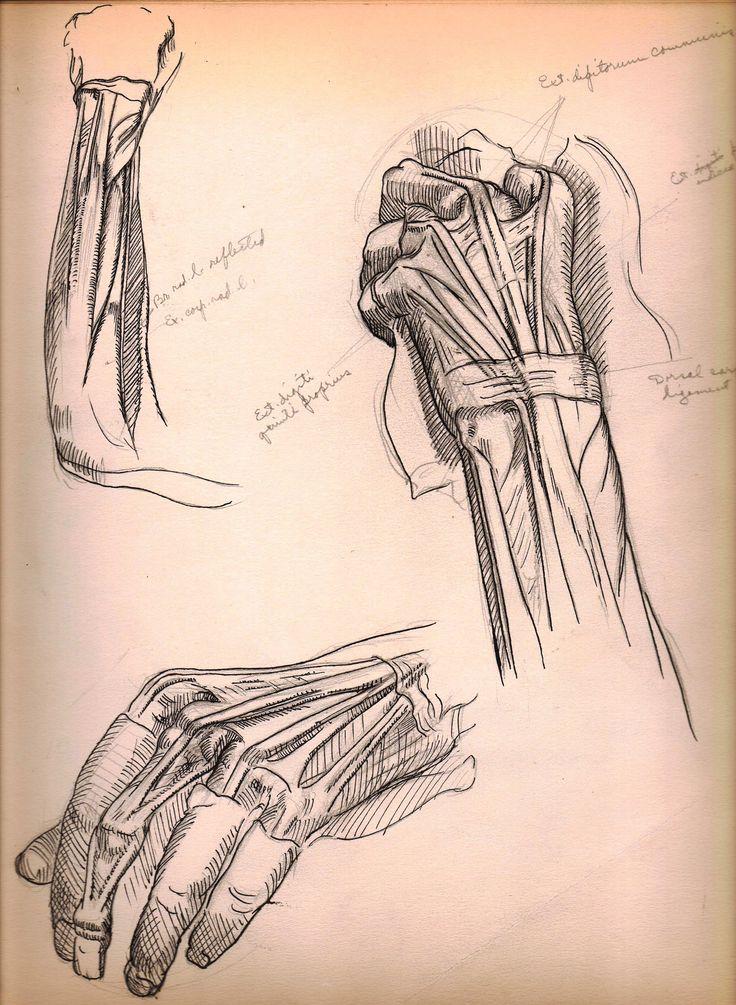 Anatomy sketches by Harry E. Stinson.