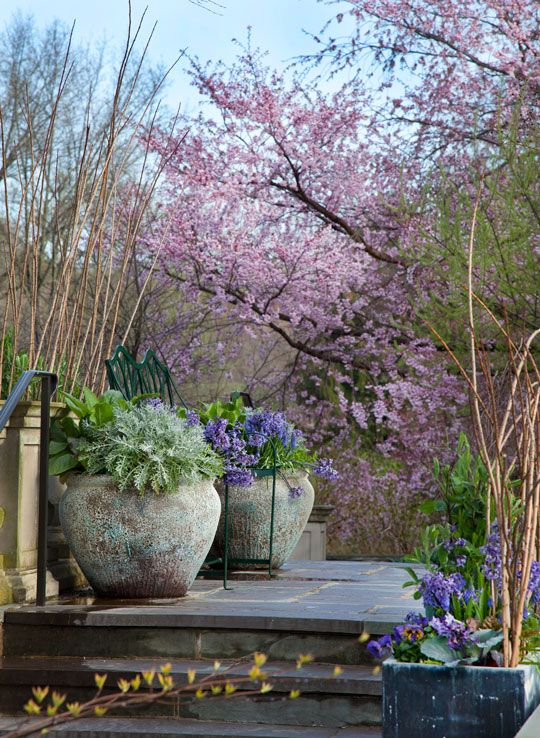 patio, gardening, container gardening, look at those gorgeous containers! Blossoming tree