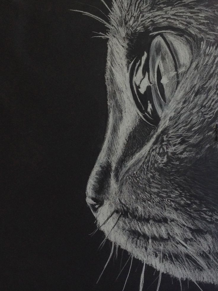 Close up of a cat in white charcoal on black paper                                                                                                                                                     Más