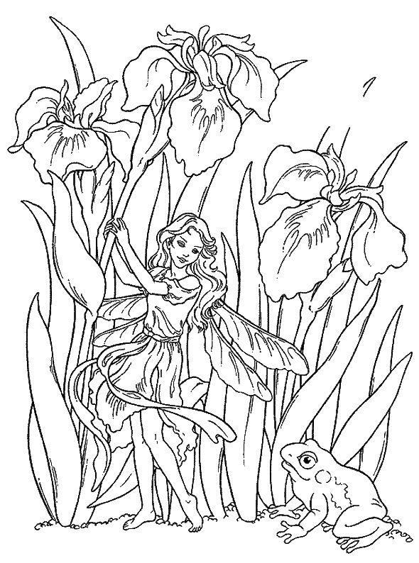 Les Iris Versicolores