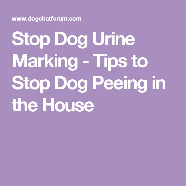 How To Get A Dog To Stop Urine Marking