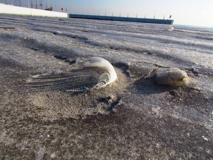 Przymarznięte piórko na plaży w Gdyni :)