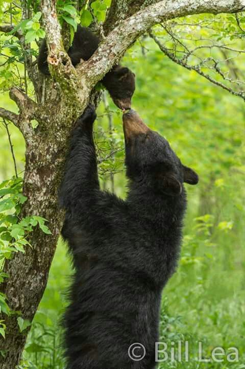 ♡Ahhhh! Mama's little bear gets a reward  for learning  to climb  a tree