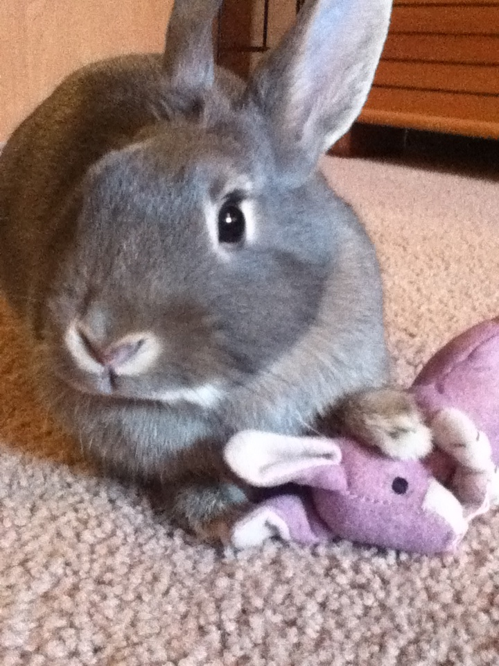 Cuddles with my bunny