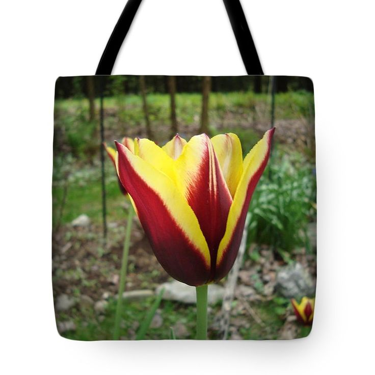 Red Tote Bag featuring the photograph Red Yellow Tulip Gavota by Lyssjart Sj