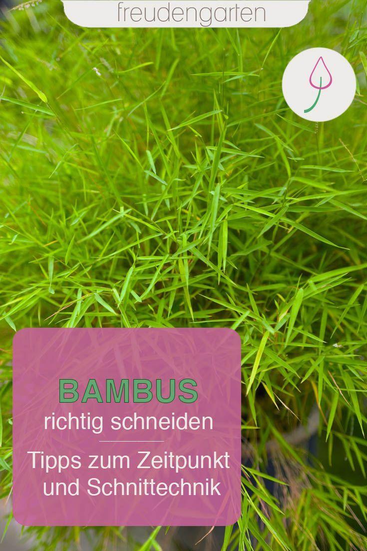 Bambus Schneiden Pflanzen Bepflanzung Und Terrasse Pflanzen