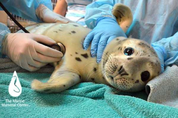 The Marine Mammal Center: A-