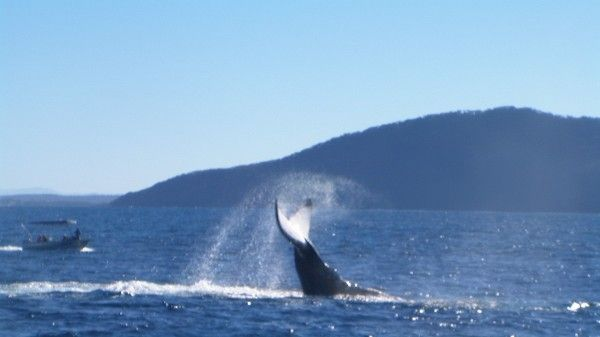 Daves Best Whale Shoots 04.07.2014