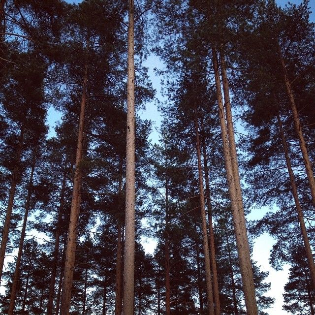 Kotimatkalla <3 | Driving home past hundreds of lakes and thousands of pine trees.