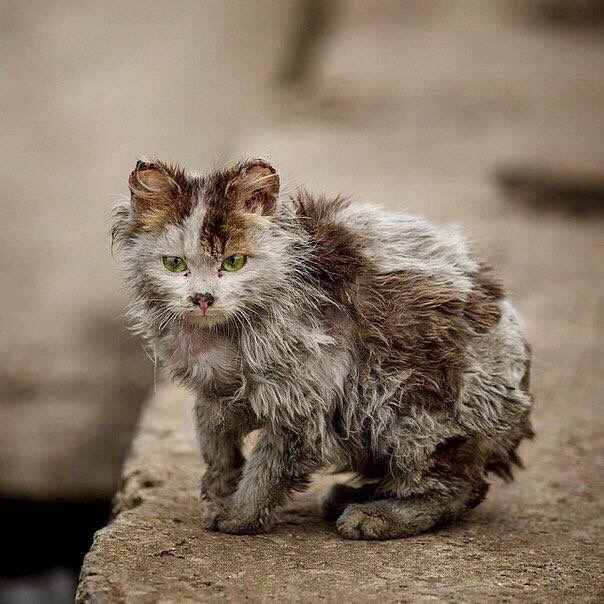 что чем бездомный котенок фото они братом сделали