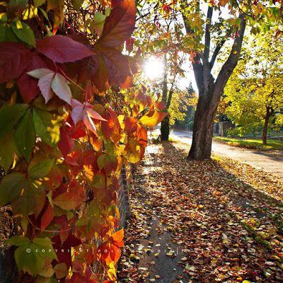 Pölcz Klaudia - kisklau: Napos ősz a Botanikus kertben.