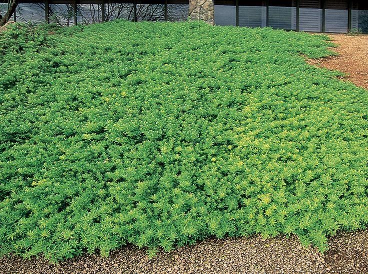 Central Florida Landscape Plants Botanical Name