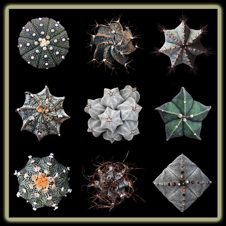 Cuaderno de Gaia: Cactus y plantas crasas, hoy lunes 16 de abril.